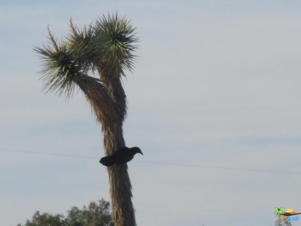 0 STONEHILL POLARIS, Joshua Tree, CA 92252