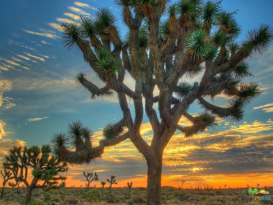 61776 NAVAJO, Joshua Tree, CA 92252