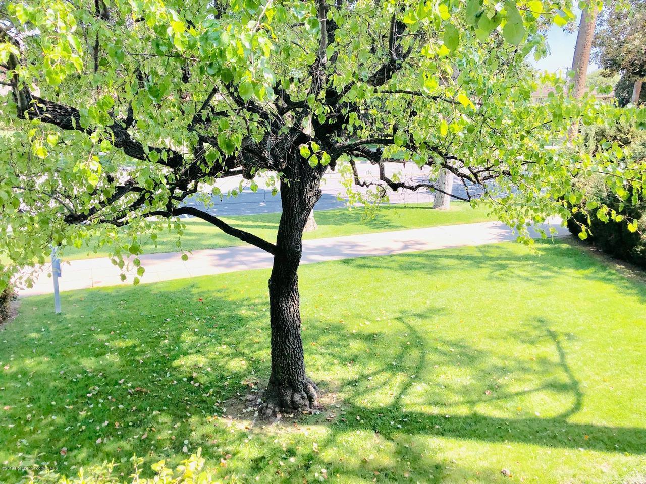 1205 ORANGE GROVE, Pasadena, CA 91105 - OG tree 1