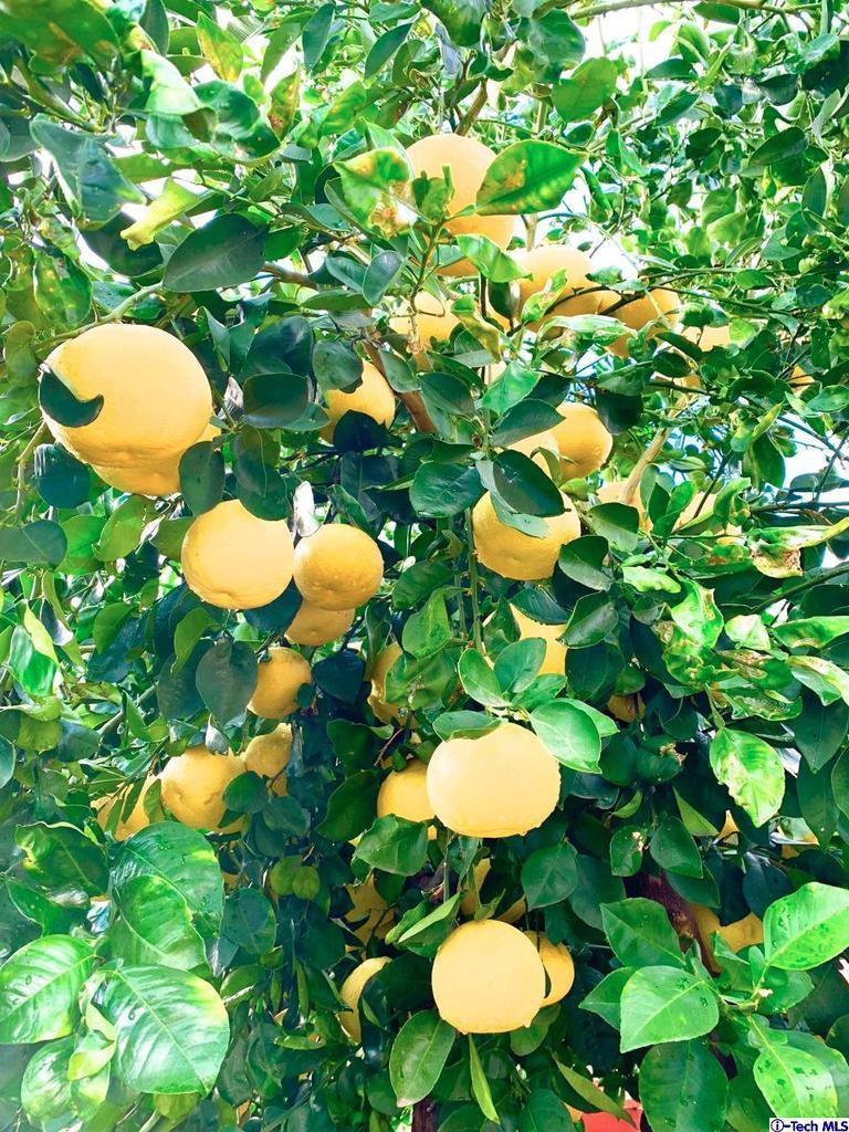 9001 HILLROSE, Sunland, CA 91040 - MULTIPLE FRUIT TREES THROUGHOUT...